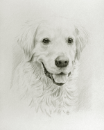 portrait--retrieverportrait--retriever.png